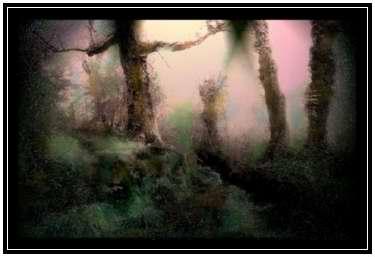039-n-soto6-bosque.jpg